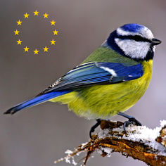Ecoguide - birds of Europe