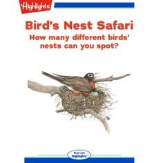Bird's Nest Safari: How many birds' nests can you spot?
