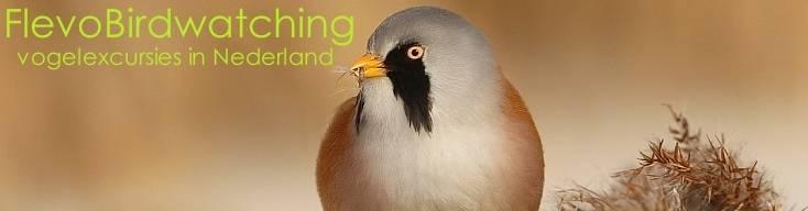 Naar de vogelgexcursies van FlevoBirdwatching